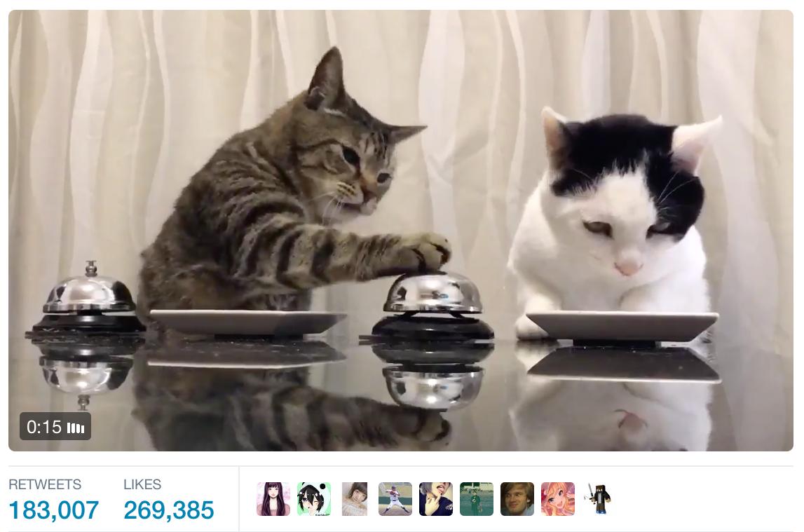 cats ring bill for treats